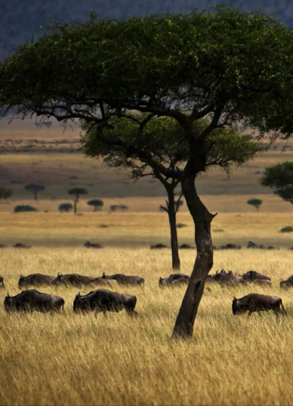 """""""African Sentiment #1"""" Artwork zoomed to the Savanna landscape. This art print is available in different sizes. This piece is a part of the panoramic work."""