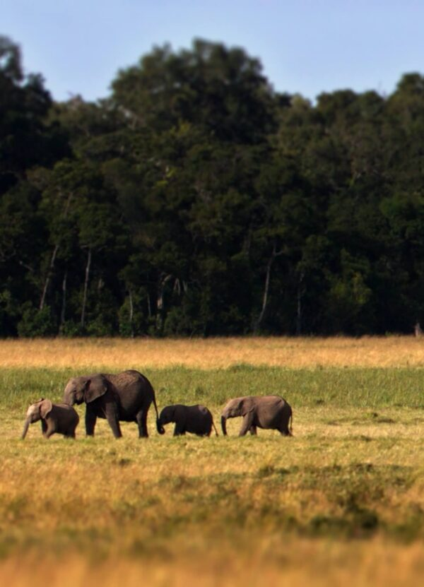 """""""African Sentiment #4"""" Artwork zoomed on the elephant family. This art print is available in different sizes. This piece is a part of the panoramic work."""
