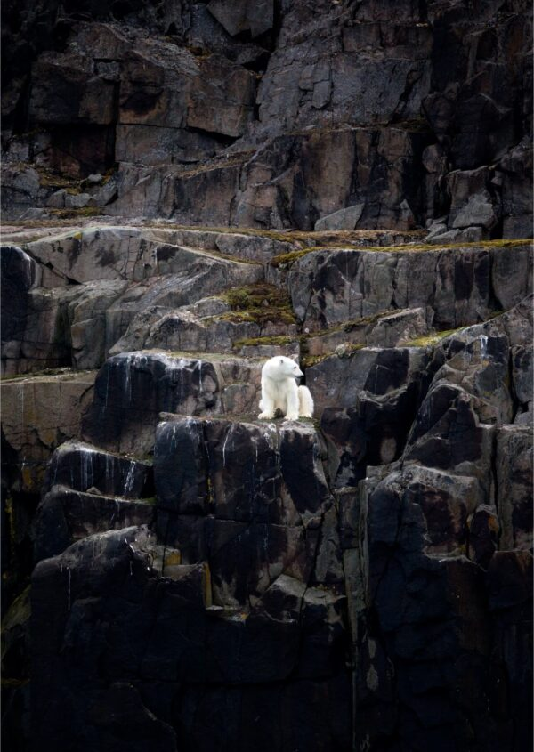 """""""Interior"""" Artwork is a colour photograph of polar bear sitting on the rocks. Art print available in different mediums."""