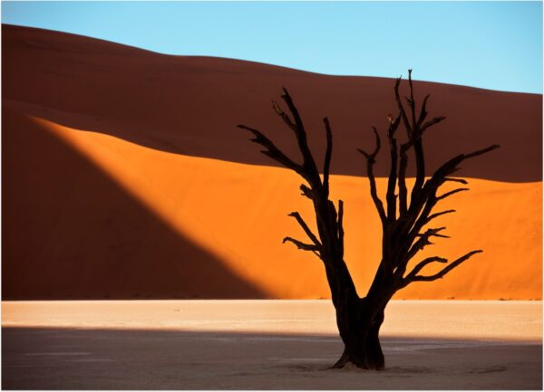 """""""Snagness #1"""" Artwork is a colour photograph of isolated tree in the desert on the orange and blue sky background. Art print available in different mediums."""