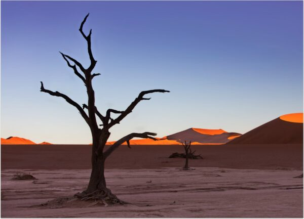 """""""Snagness #2"""" Artwork is a colour photograph of isolated tree in the desert on the blue sky background and sand hills. Art print available in different mediums."""