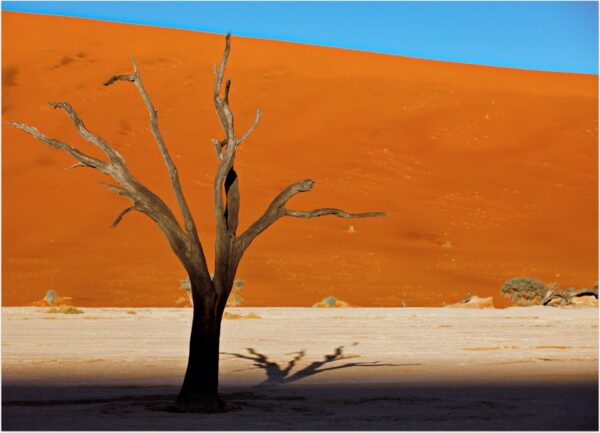 """""""Snagness #3"""" Artwork is a colour photograph of isolated tree in the desert on the orange and blue sky background. Art print available in different mediums."""