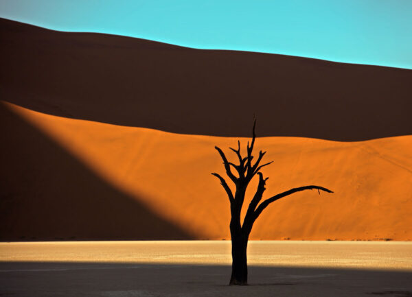 """""""Snagness #4"""" Artwork is a colour photograph of isolated tree in the desert on the orange and blue sky background. Art print available in different mediums."""