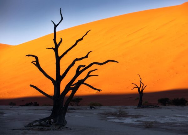 """""""Snagness #5"""" Artwork is a colour photograph of isolated tree in the desert on the orange and blue sky background. Art print available in different mediums."""