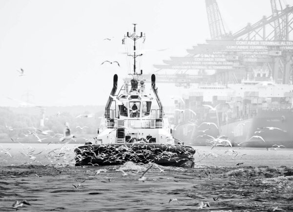 """""""Bugsier I"""" Artwork is a black and white photograph of a bugsier boat and the seagulls around it."""