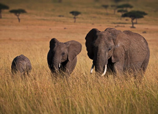 """""""Family Life"""" Artwork is a colour photograph of an elephant family facing the camera."""