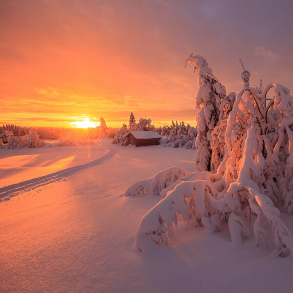 """""""Frosty Evening"""" Photograph is a colour artwork capturing the sunset reflecting in the snow on the Finnish landscape."""