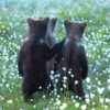 """""""The Gang"""" Photograph is a colour artwork capturing the back of the three baby bears in the field."""